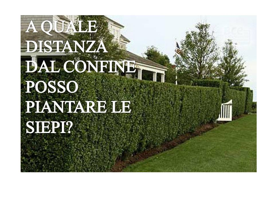 PARERE N. 747: A QUALE DISTANZA DAL CONFINE POSSO PIANTARE LA SIEPE?